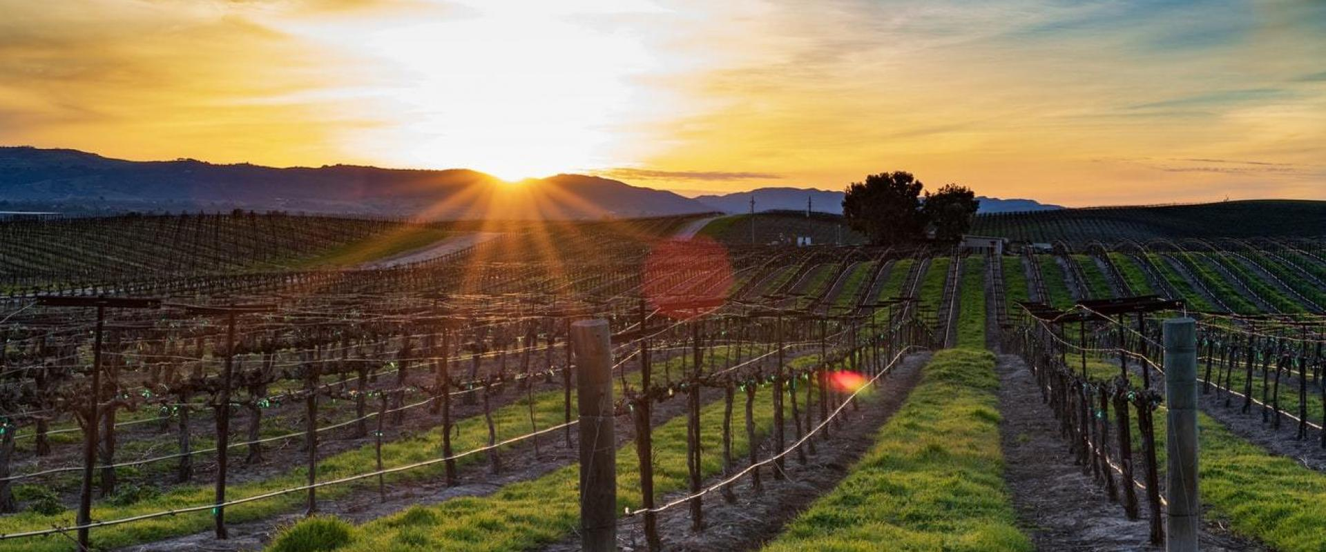 Large quality vineyard property For Sale in Barossa Valley, SA contact Yun Han