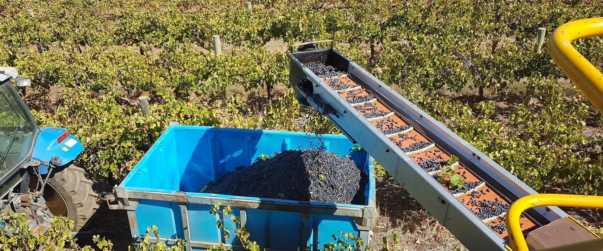 Winery property for sale in SA contact Yun Han