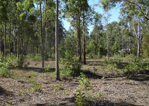 Rural Properties - Boonah Real Estate