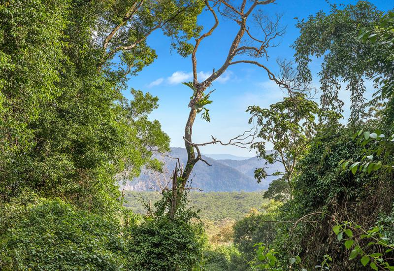 41 Acres Surrounded by Goonengerry National Park