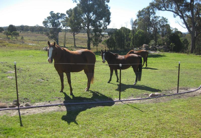 Horses-Cattle -Views -Peace!