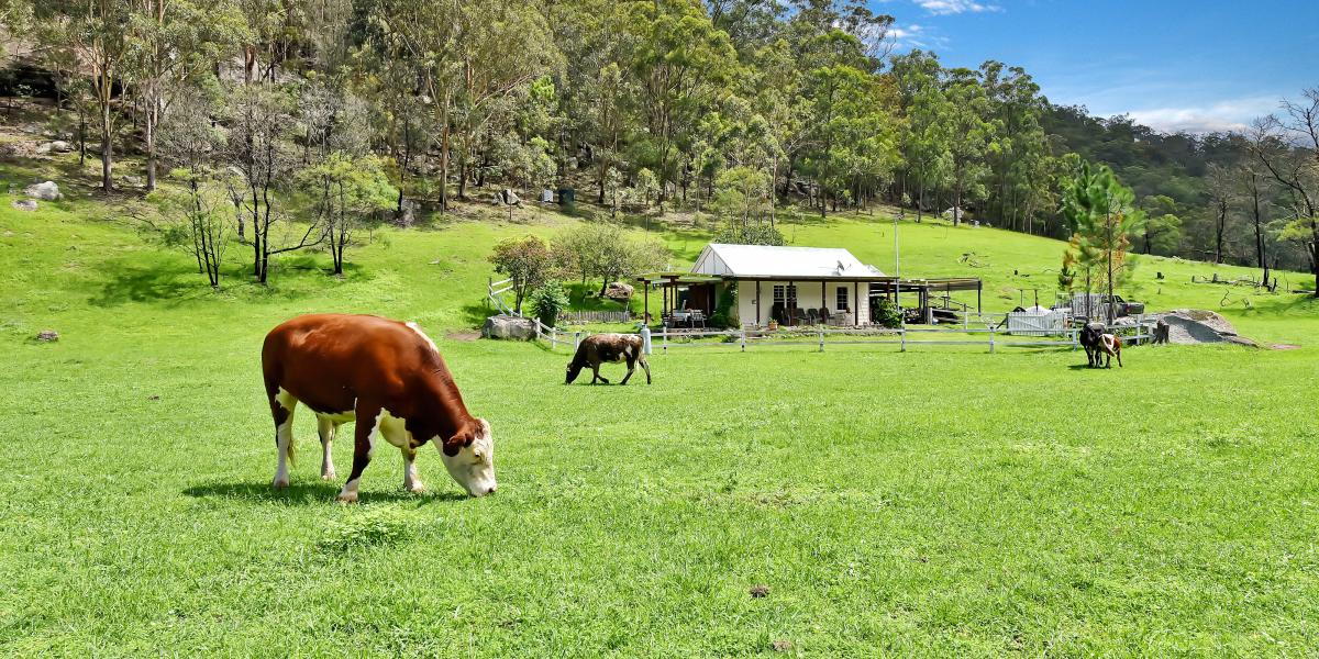 Picturesque 50 Acre Hobby Farm In The Wollombi Valley