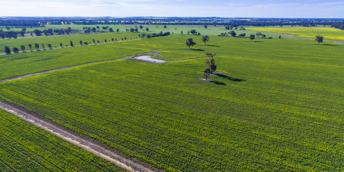 """WATTLE GROVE"" - A GREAT FARMING OPPORTUNITY"