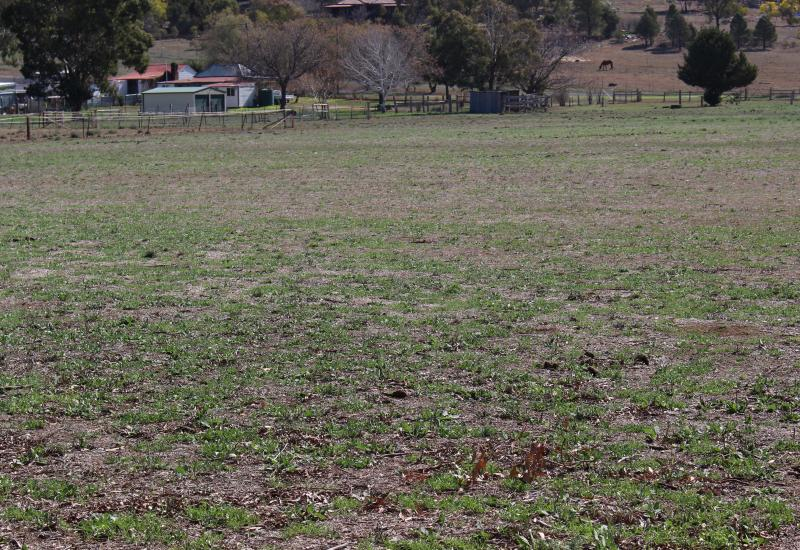 VALUE FOR YOUR INVESTMENT $ HERE ! PRICE REDUCTION  Willow Bend Farm Geurie