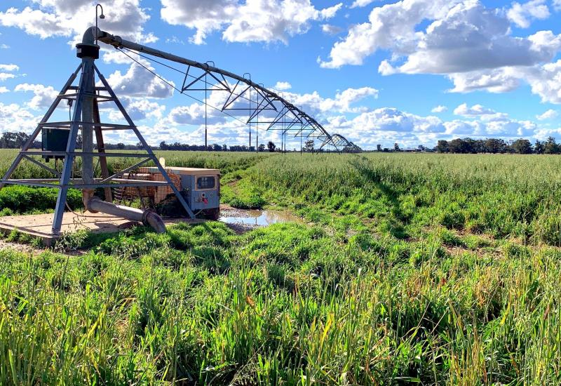 Outstanding Irrigation Property on the Castlereagh River WIWO