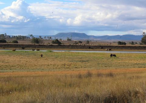 Southern Downs Realty - Rural