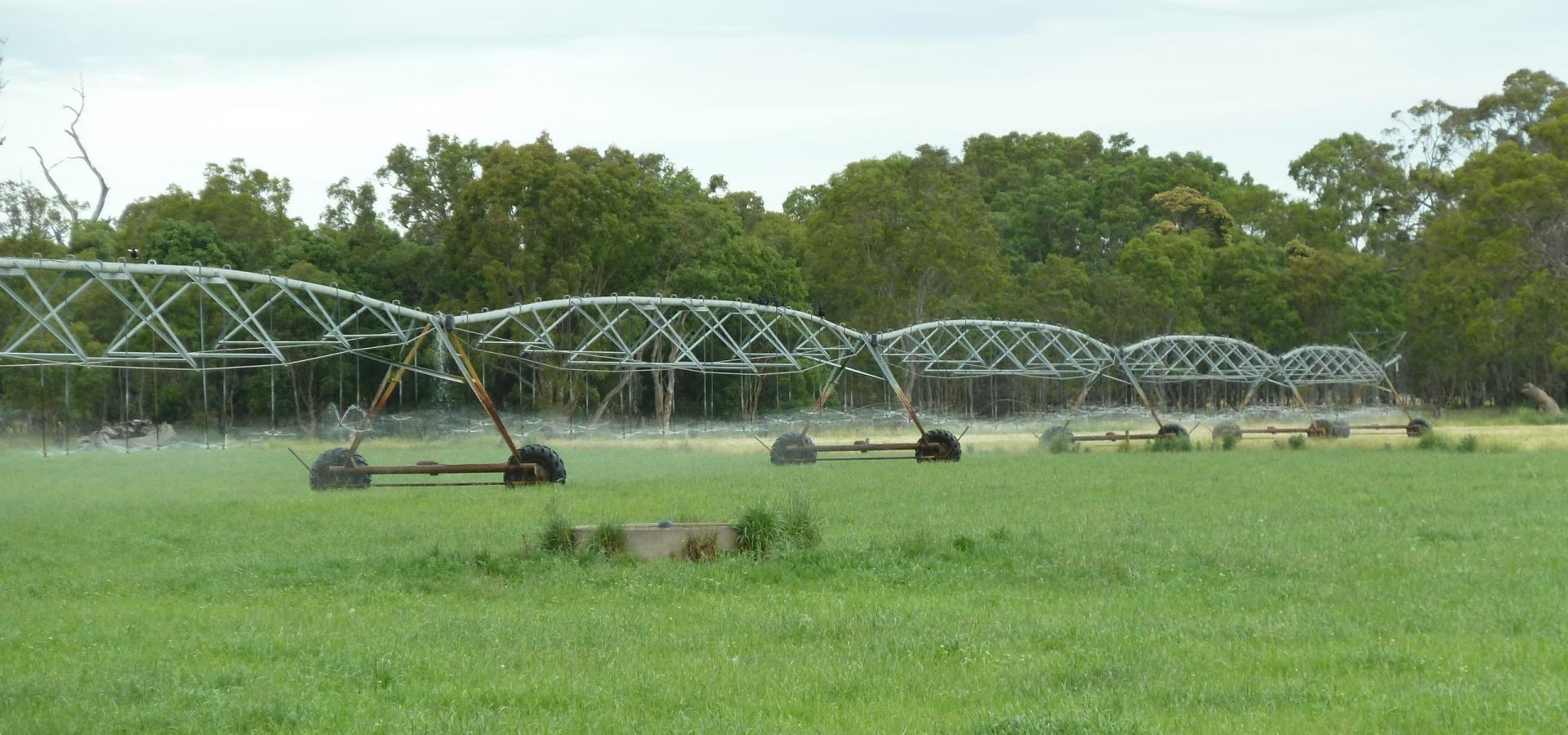 IRRIGATED GRAZING OPPORTUNITY