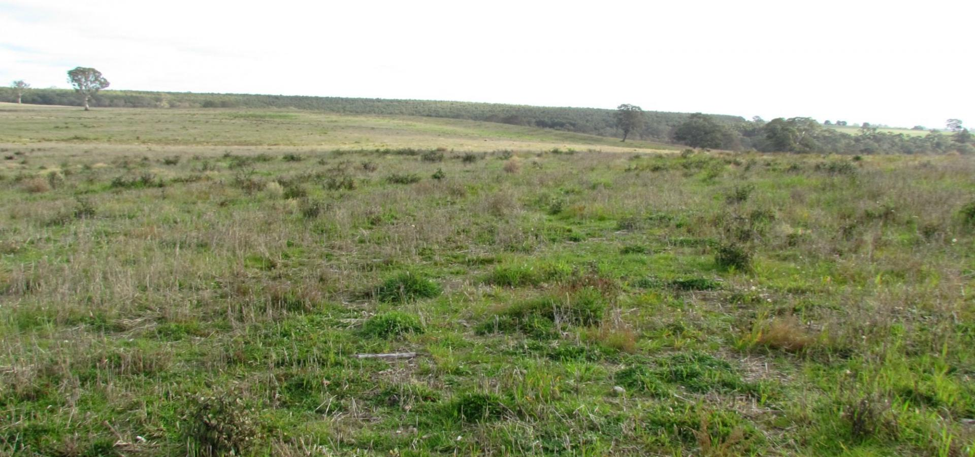 1546 Chetwynd East Road - Chetwynd 320.52 Hectares