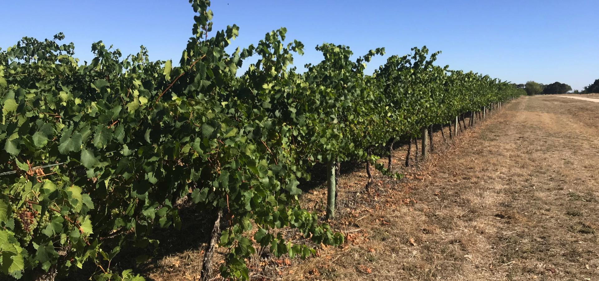 Waloram Estate - 10ha Vineyard