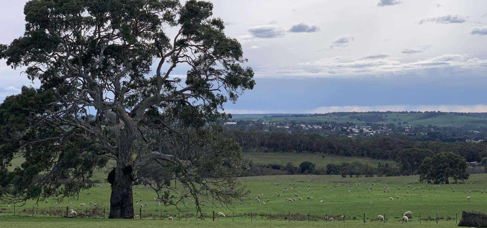 39 Kellys Road Casterton - 247 Acres - 11am 4th Oct 2019 @ Bahgallah Hall