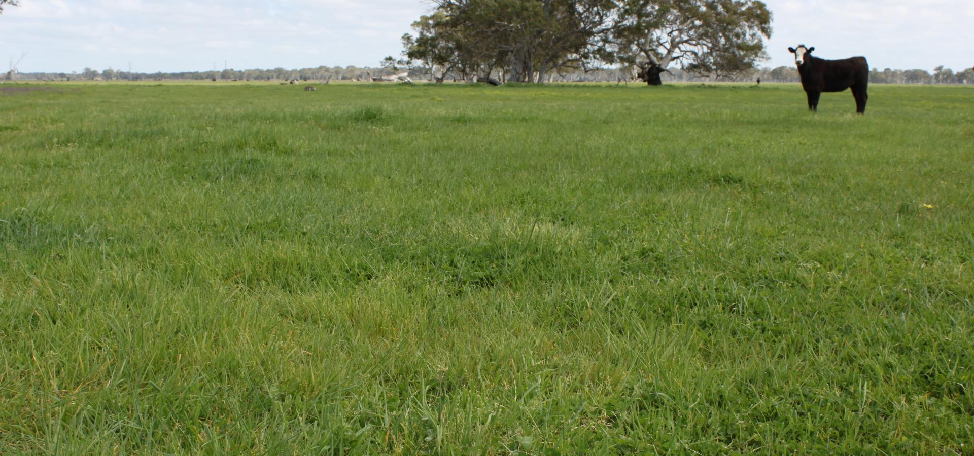 Prime Grazing Opportunity Seldom Offered