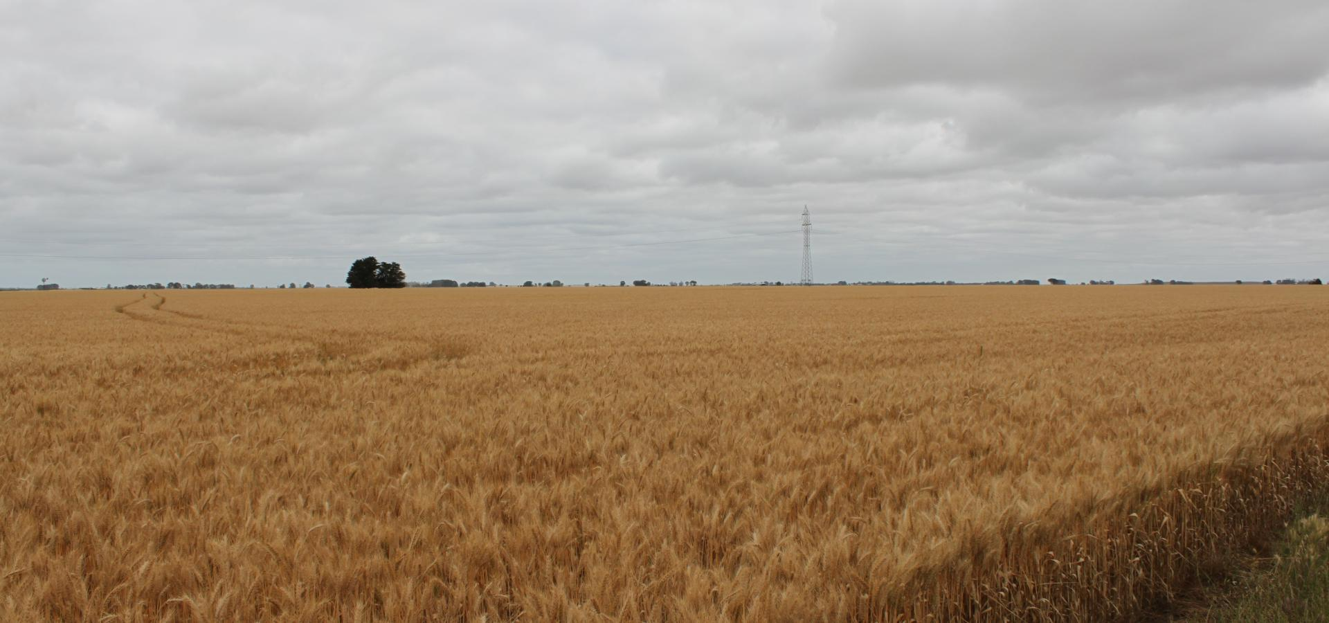 STRONG CROPPING/GRAZING COUNTRY