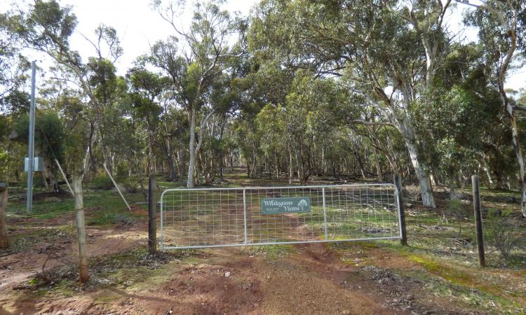 Whitegum Views – A must see!!!