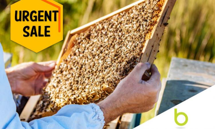 Relocatable Northland Apiary - ASAP Sale Required